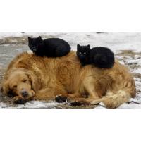 Общие рекомендации по эксплуатации отпугивателей собак