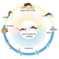 О комарах и способах борьбы с ними